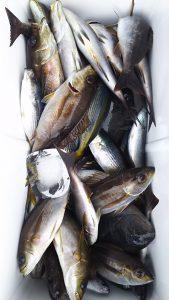 昨夜(7/1の夜🌃✨)神子元島の夜釣り釣果速報❕❕