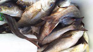 昨夜(7/3の夜🌃✨)神子元島の夜釣り釣果速報❕❕